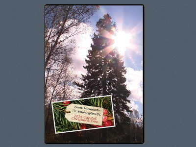 From Minnesota to Washington DC: The 2014 U.S. Capitol Christmas Tree